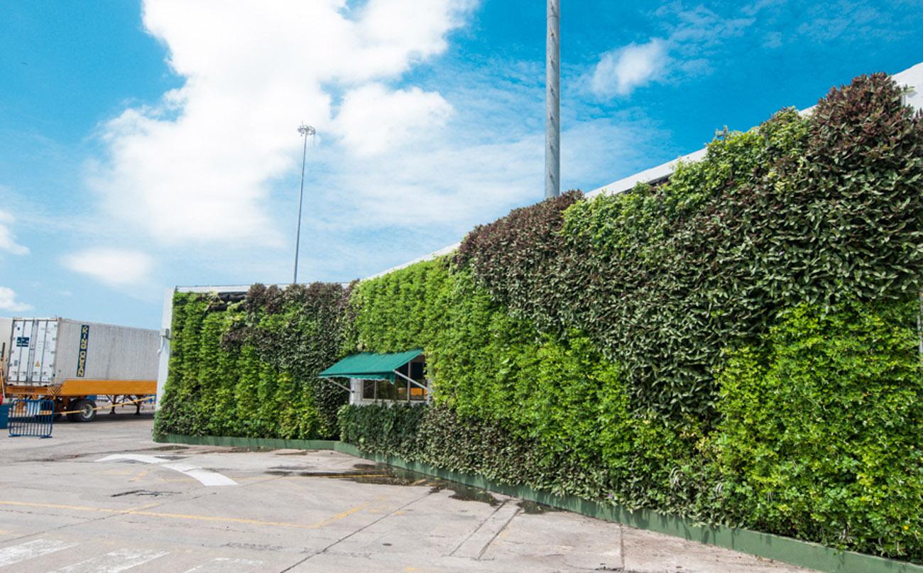 Muros verdes y techos verdes bogot y colombia proyectos for Muros verdes naturales