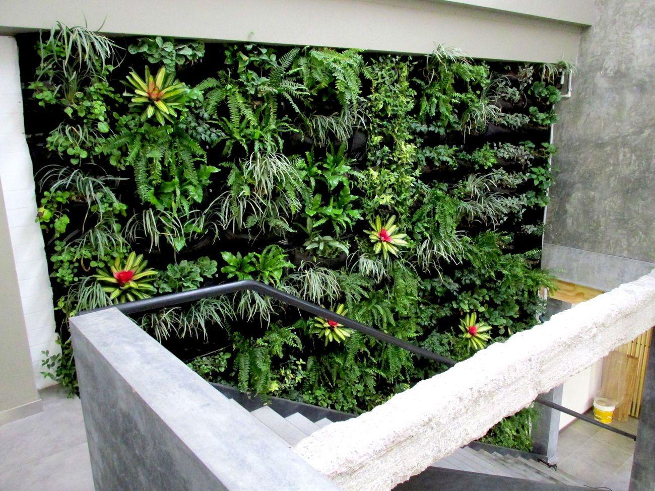 Jardines verticales bogot y colombia vert n for Jardin vertical oficina