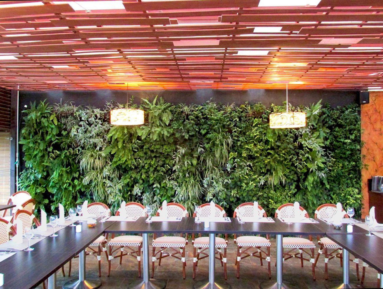 Jardines verticales bogot y colombia vert n for Plantas decorativas artificiales bogota