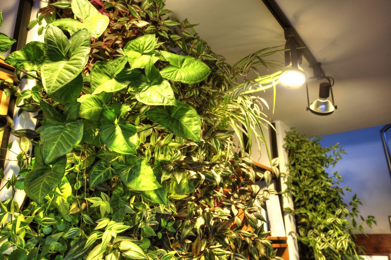 Muros verdes y techos verdes bogot y colombia proyectos - Jardines verticales interior ...