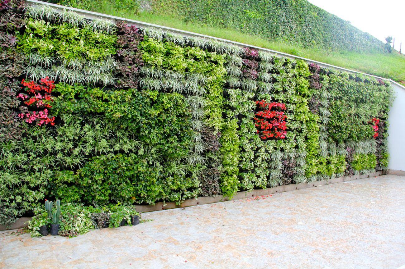 Muros verdes y techos verdes bogot y colombia proyectos for Verde vertical jardines verticales