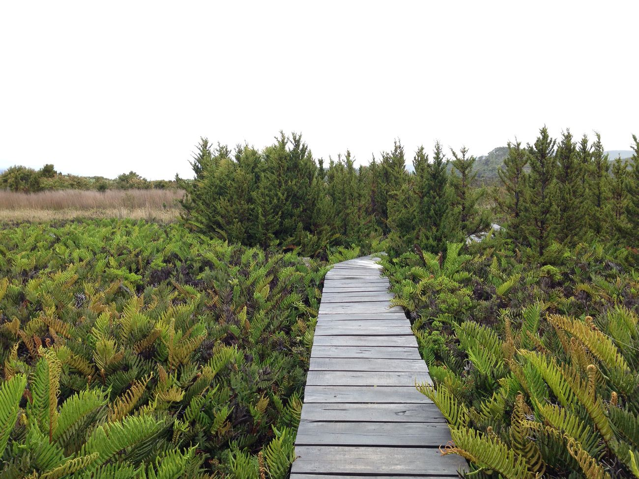 Paisajismo y jardiner a bogot y colombia productos vert n for Paisajismo jardines fotos