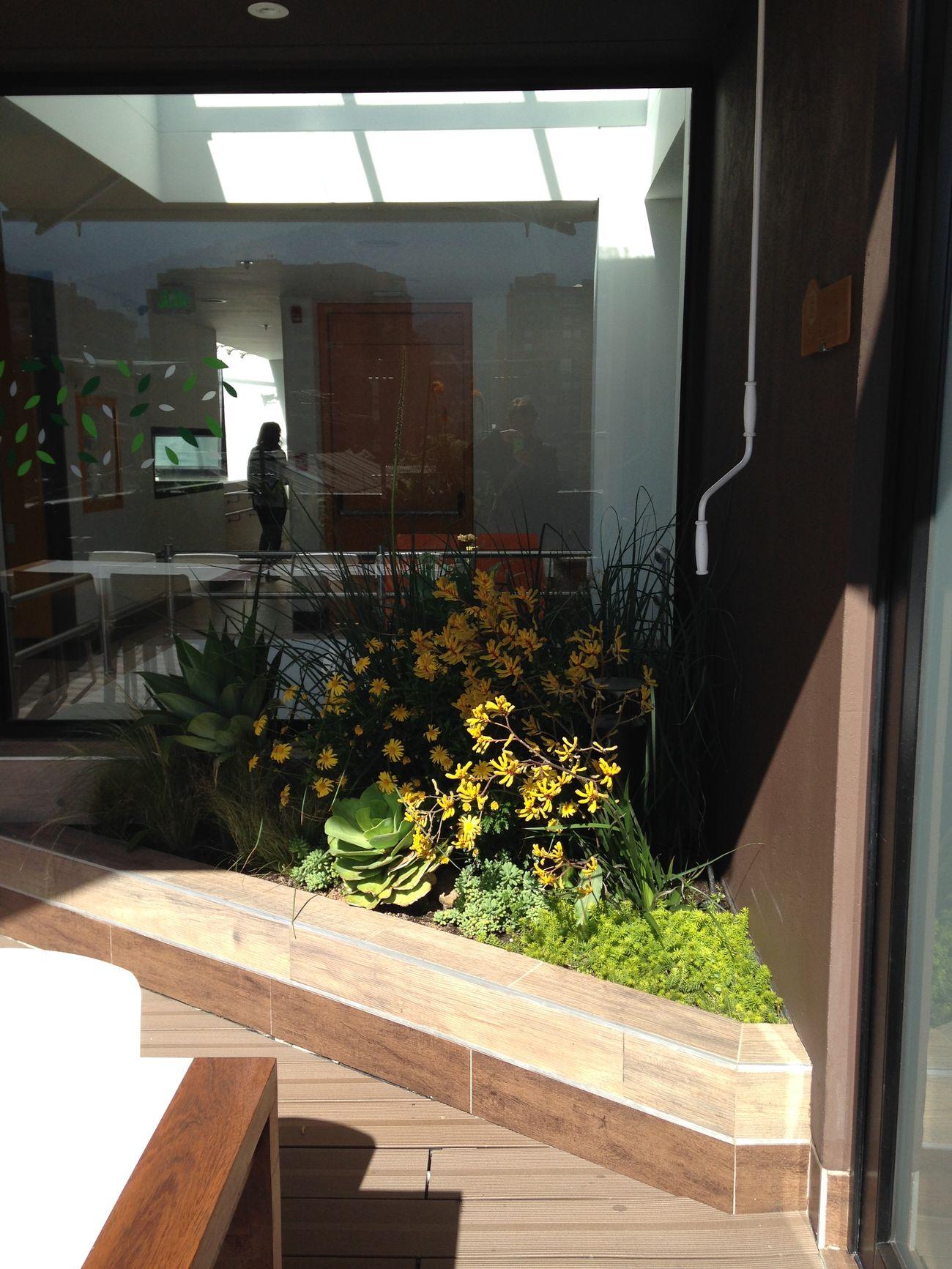 Paisajismo y decoraci n de jardines bogot y colombia vert n for Jardines de pared para interiores