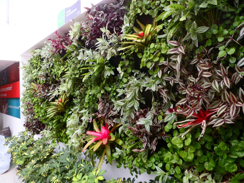 Jardines verticales bogot y colombia vert n Plantas para muros verdes verticales